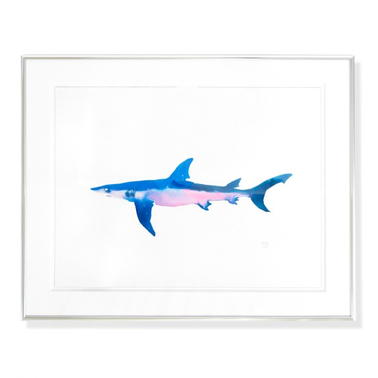 menocal_shark15