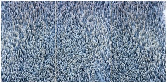 Aspen-Tree-Triptych