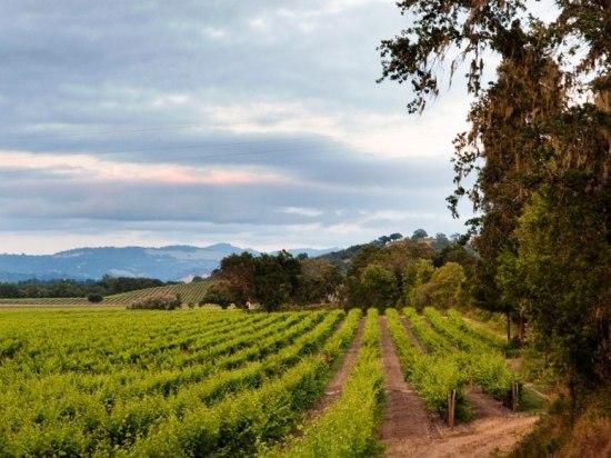 item4.rendition.slideshowWideHorizontal.top-destinations-farmhouse-vineyard