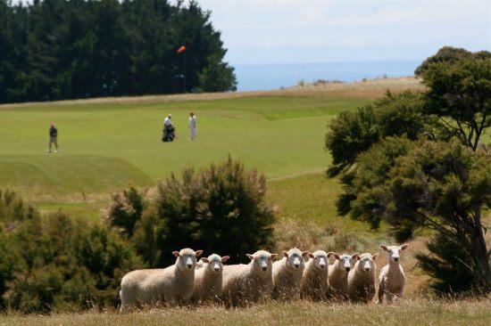 Working-sheep-farm