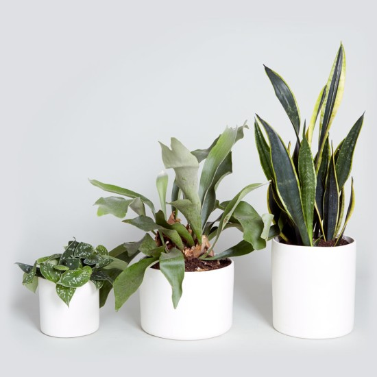 The_Sill_Indoor_Plant_Gift_Bryant_Cylinder_Set